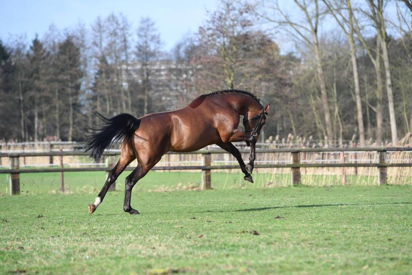 L'HERMES DE MUZE 7E IN DEENSE YOUNGSTER GP